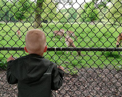 Kind kijkend naar herten